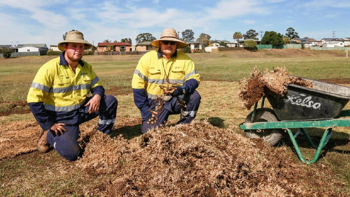 DEJA VU: Singleton Councils Parks and Gardens staff Scott Wilkinson and Mason Craig lay turf for a third time at Alroy Oval.